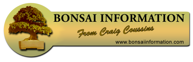 Cousins - Craig - Bonsai Blogs and Advice