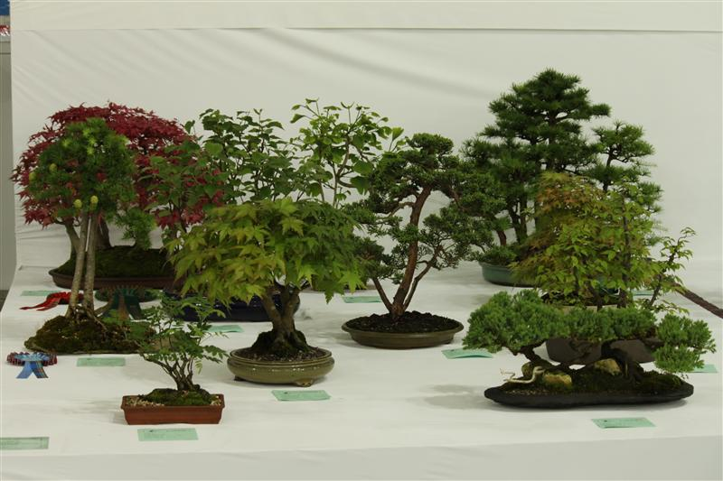 Bonsai Tree Species - Bonsai Tree Type (Outdoors)