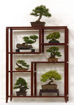 GS2012_Bonsai_Tree_Images_Gardening_Scotland.jpg image