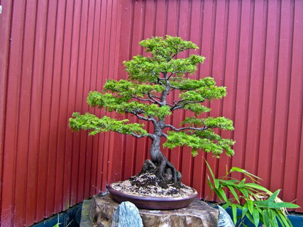 National_Bonsai_Collection.jpg image