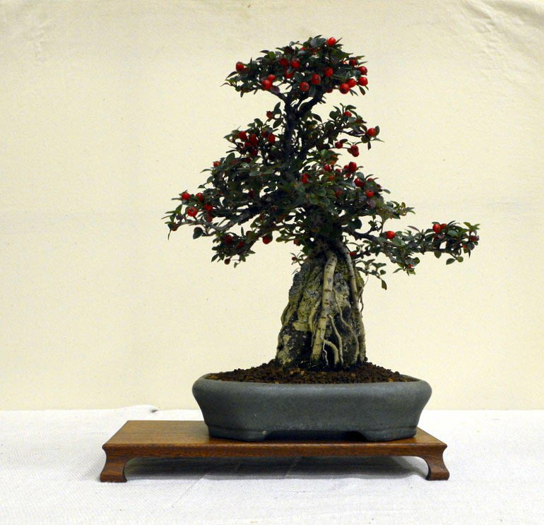 Warminster Bonsai - Bonsai Club or Group