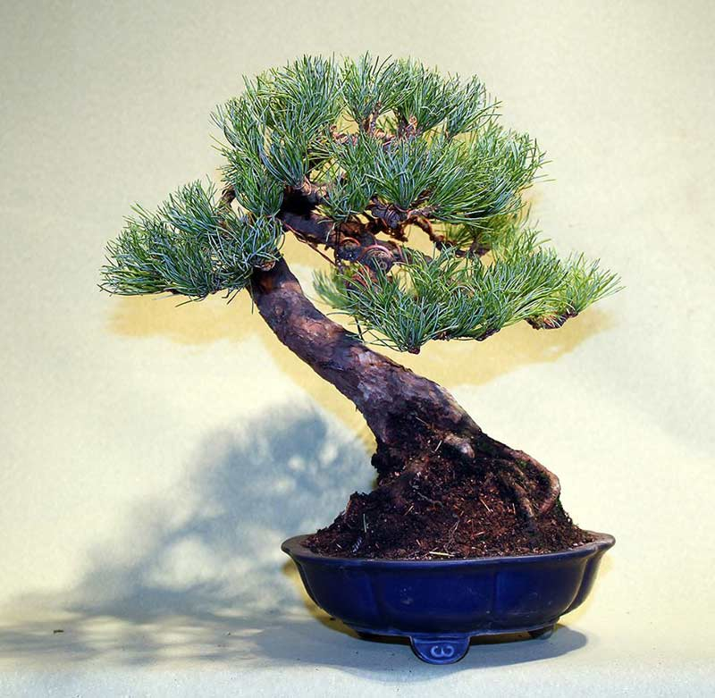 bonsai-at16.jpg image