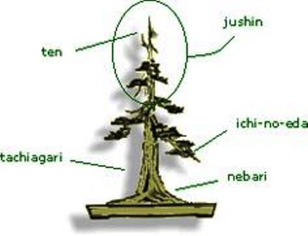 bonsai_branch_structure_021.jpg image