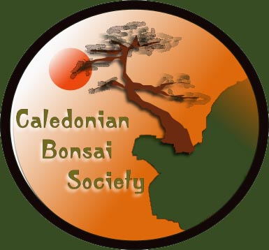 bonsai_caledonian_bonsai_01.jpg image