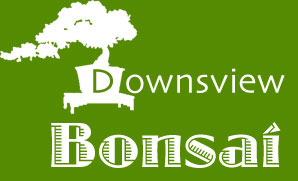 bonsai_downsview_bonsai_nursery_01.jpg image