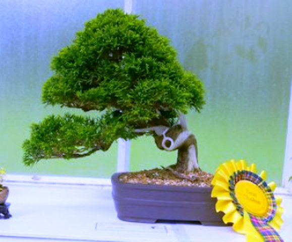 bonsai_elongated_style_01.jpg image