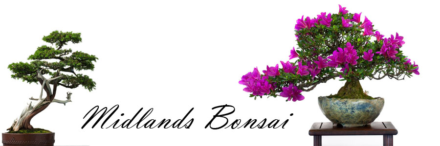 bonsai_midlands_bonsai_01.jpg image