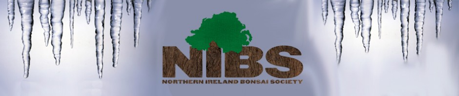 bonsai_nothern_ireland_bonsai_01.jpg image