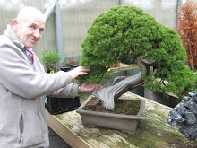 bonsai_ray_coulombe_01.JPG image