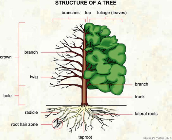 bonsai_tree_structure_01.jpg image