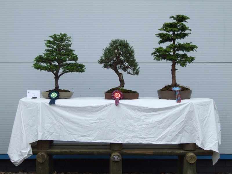 judging_bonsai_01.jpg image