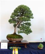 Best in Show Murray Robertson