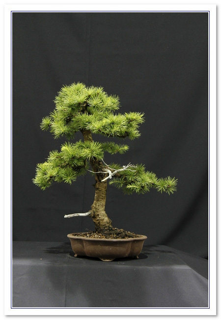 GS2015 - Larch