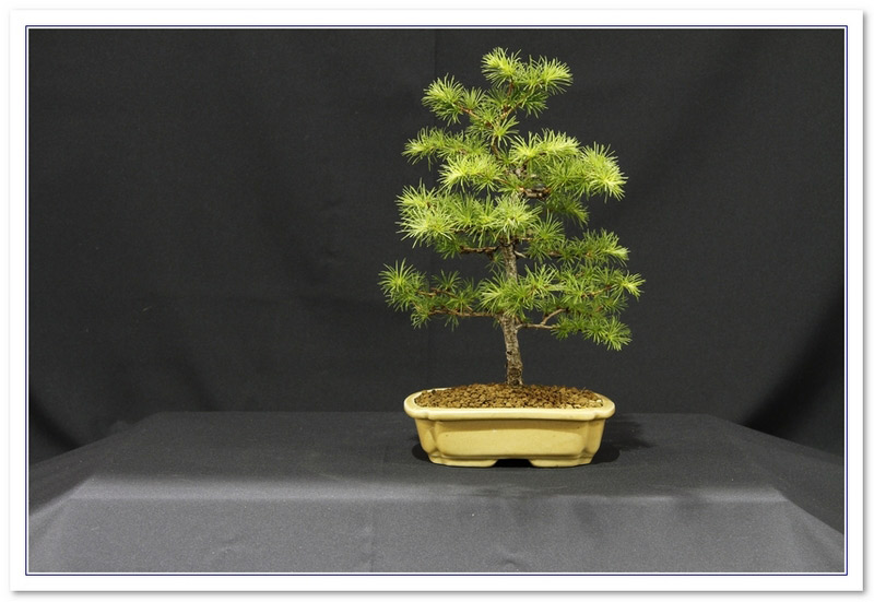 GS2015 - Larch 10