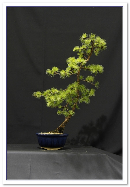 GS2015 - Larch 20