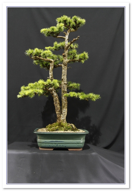 GS2015 - Larch 28