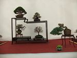 Other Bonsai Exhibition Images