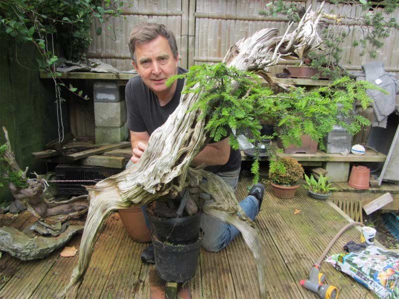 Tony Tickle Bonsai Dealer