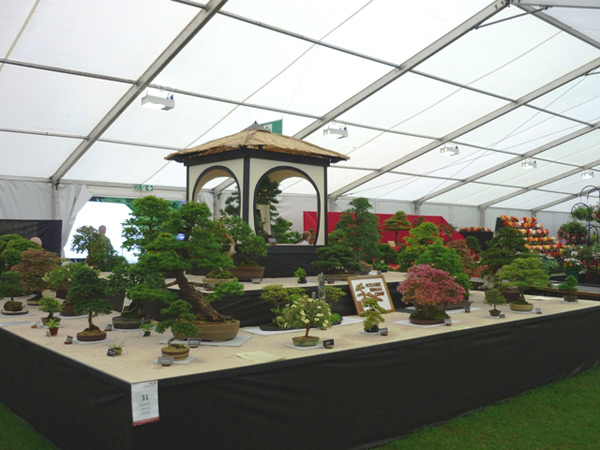 Ayr Flower Show Bonsai Bonsai Exhibitions