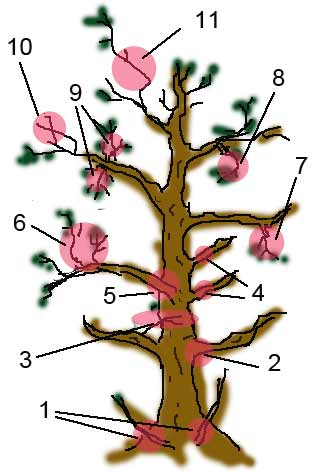 Branch Pruning Bonsai Procedure