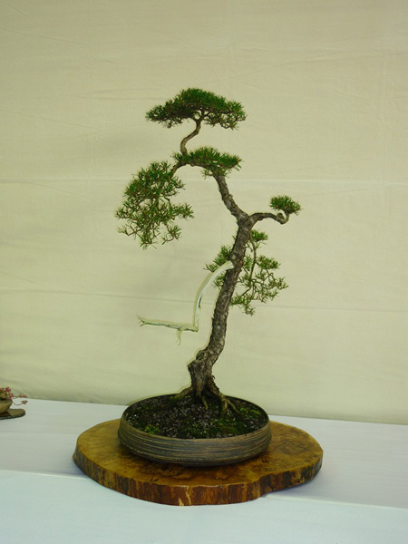 Bunjin Bonsai Tree Style